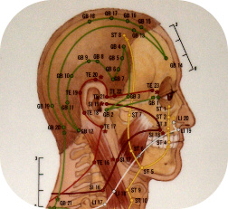Acupuncture points on the head.